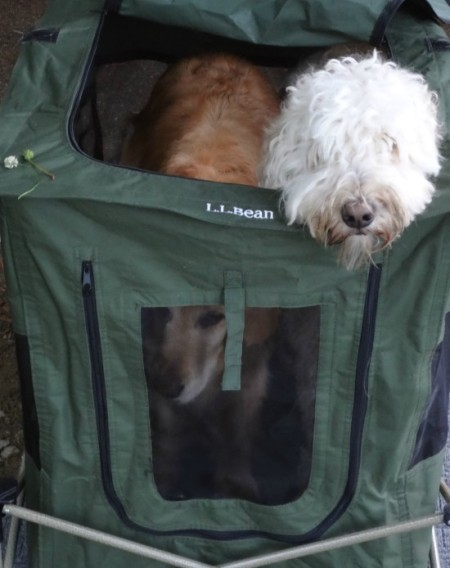 dog crate for camping
